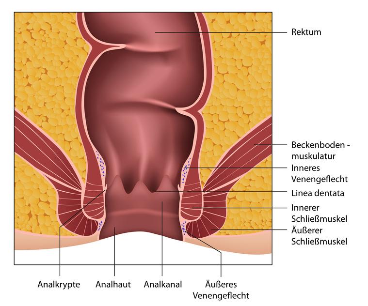 anatomie analkanal Heinsberg