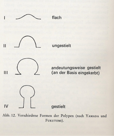 formen-polypen